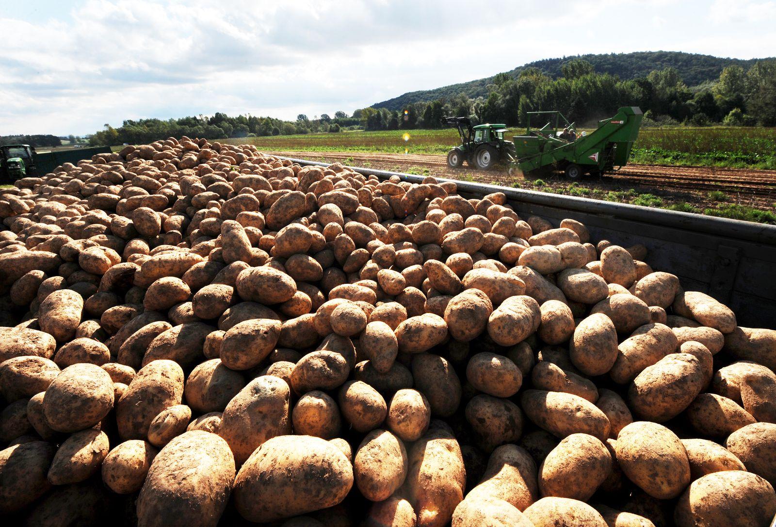 Kartoffelernte Deutschland