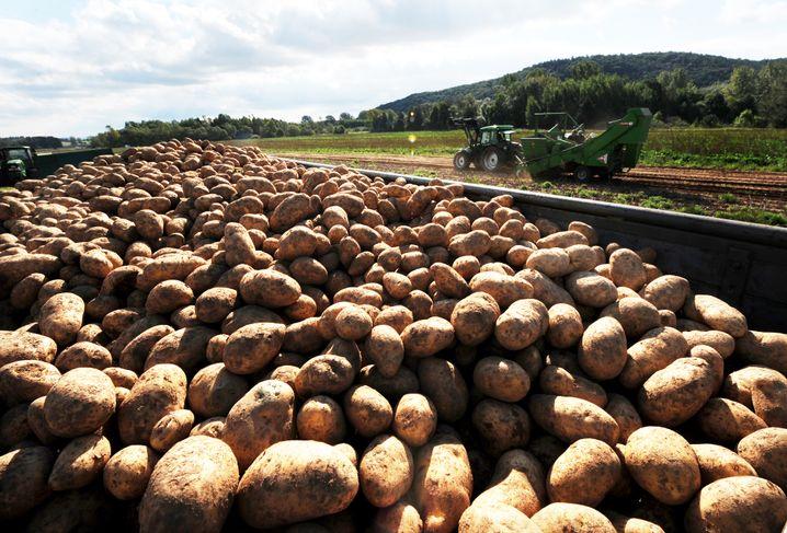 Kartoffelernte in Hessen