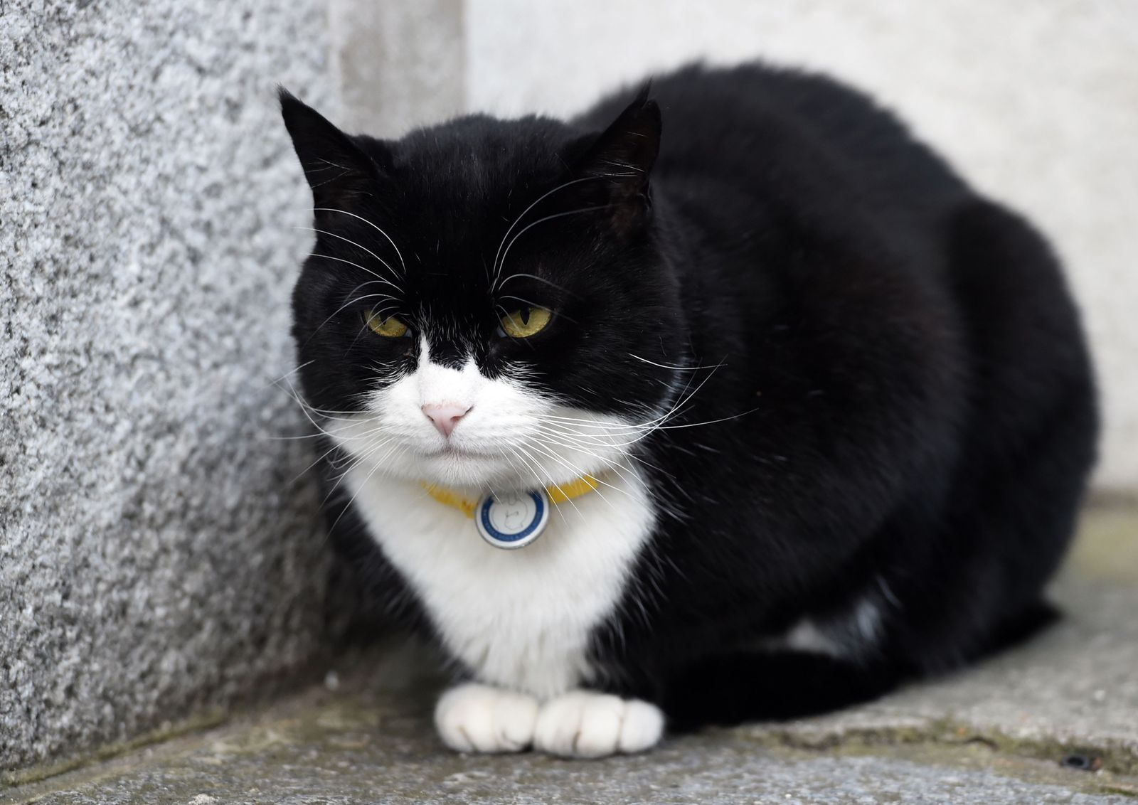 Palmerston, the Foreign office cat retires, London, United Kingdom - 29 Jan 2018