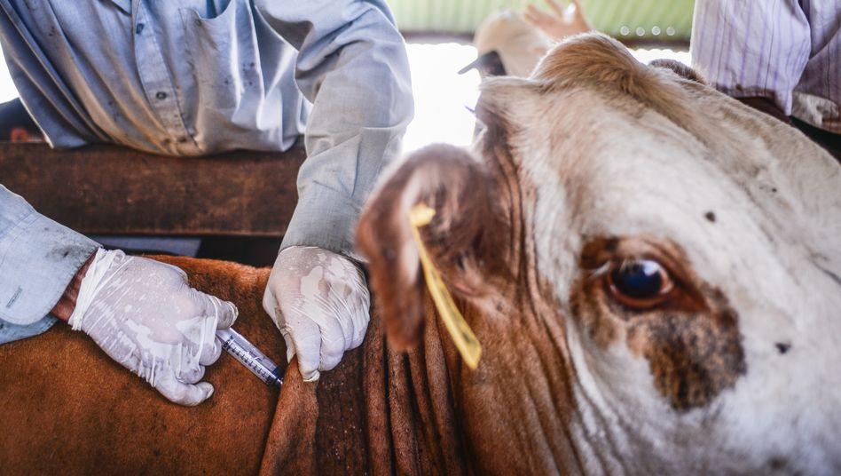 Durch Landwirtschaft rücken Mensch und Tier enger zusammen: Das erhöht auch das Übertagungsrisiko für Krankheiten
