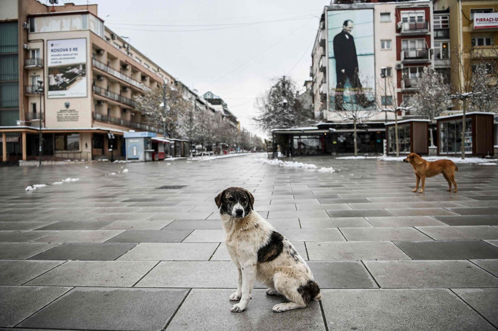 KOSOVO-HEALTH-VIRUS-ANIMAL