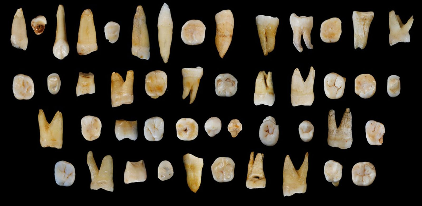 NATURE-SCIENCE-ARCHAEOLOGY