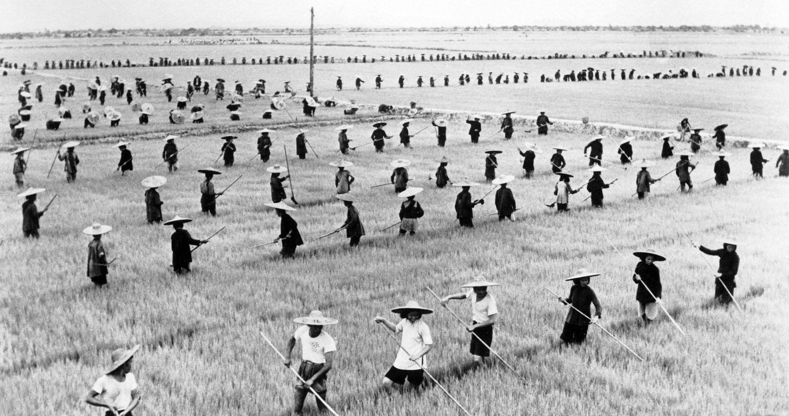 Maos Spatzenkrieg - China: Teams of peasants labouring on a communal farm during the 'Great Leap Forward' (1959 - 1961)