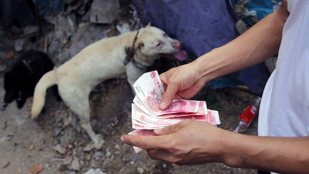 "Gräueltaten in China: Prominente im Kampf gegen das ""Hundefleisch-Festival"""