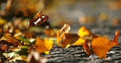 Herbstlaub in Berlin: Der gefühlte Niedergang