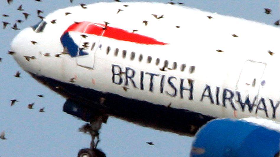 Flugzeug in Vogelschwarm: Gefahr für die Triebwerke vor allem bei Start und Landung