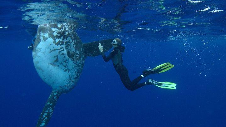Sehnsuchtstiere unter Wasser: Mondfisch, Manta und tanzende Schnecken