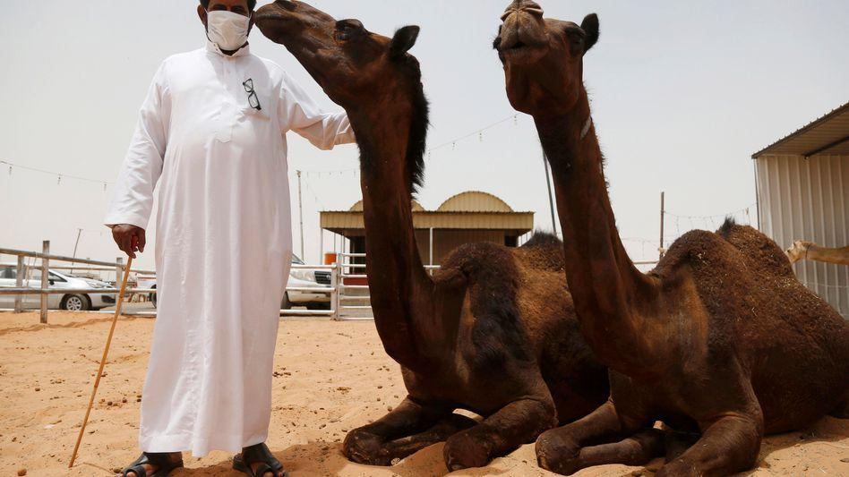 Markt in der Nähe von Riad, Saudi-Arabien: Das Mers-Virus wird wohl vor allem von Kamelen auf den Menschen übertragen
