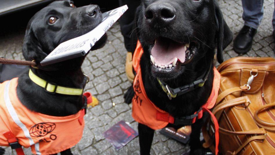 Raubkopie-Schnüffler (2007): Diese Hunde riechen Datenträger und leiden vermutlich unter Tauschbörsen