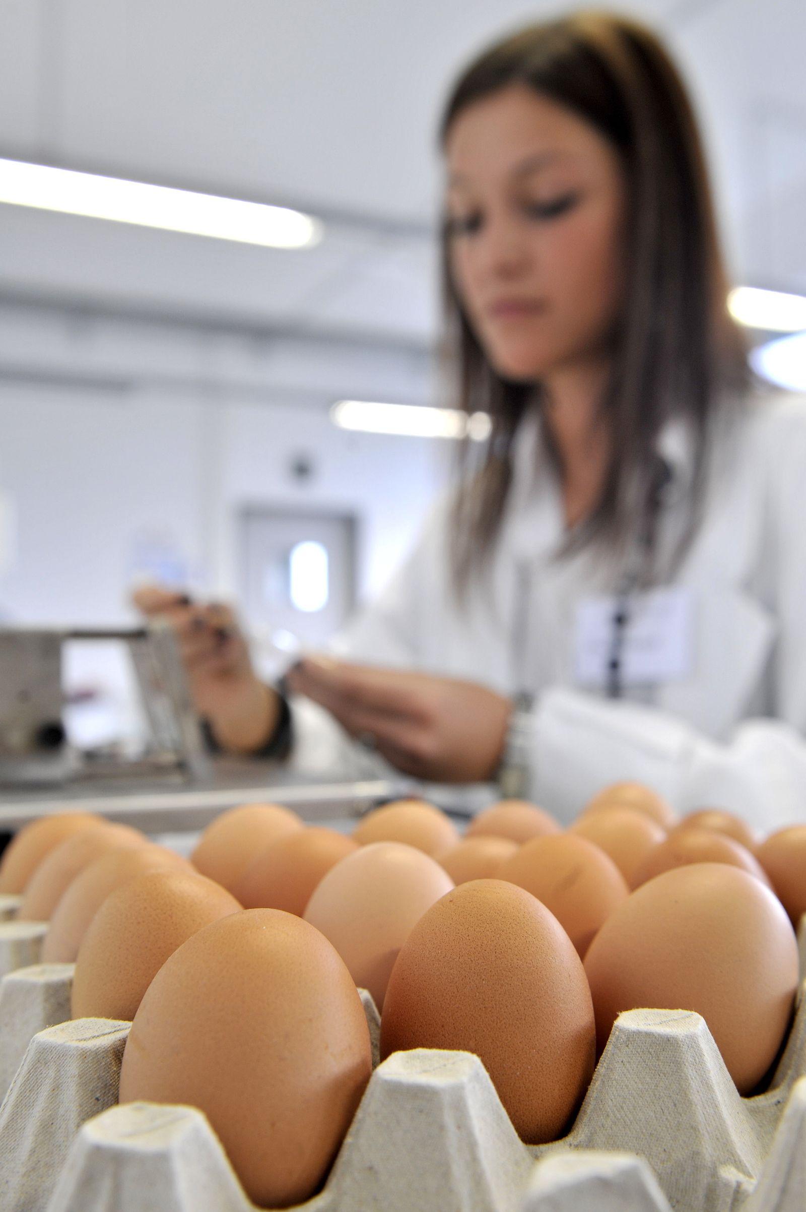 NICHT VERWENDEN Dioxin-Eier