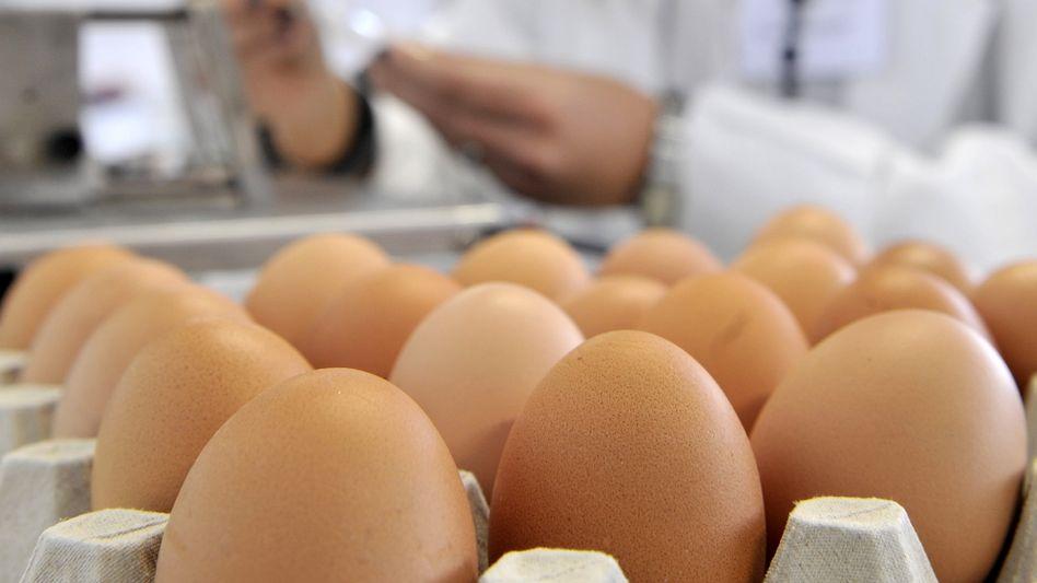 Untersuchung von Eiern im Labor: Erneuter Dioxin-Fund in NRW