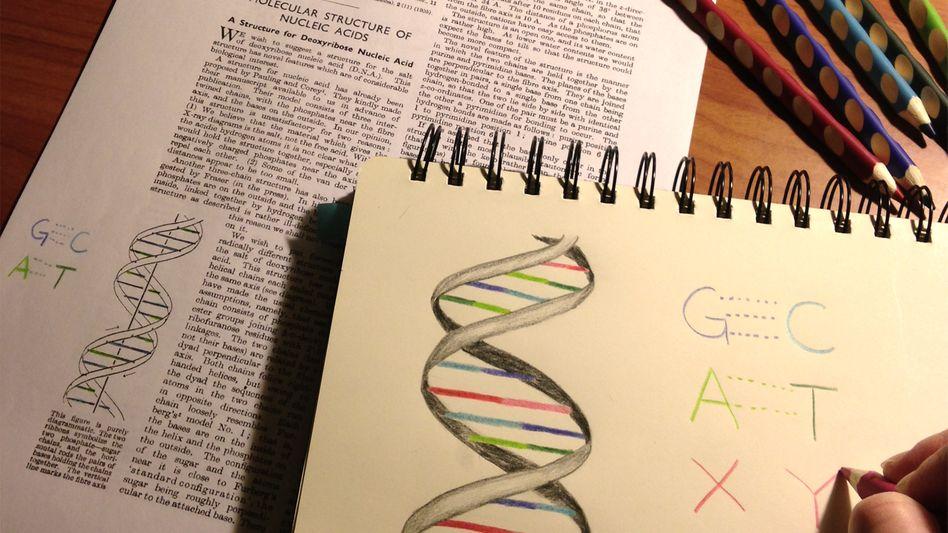 Zwei Buchstaben mehr im Alphabet des Lebens: Forscher fügen einem Bakterium zwei neue Basen hinzu