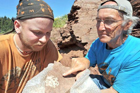 """Forscher mit fossilem Schädel einer bisher unbekannten Ursaurier-Art: """"""""Wir haben hier ein erdgeschichtliches Fenster"""""""