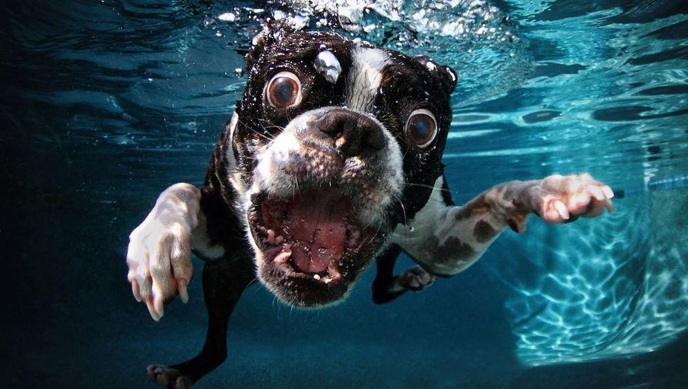 Hunde unter Wasser: Dackel auf Tauchgang