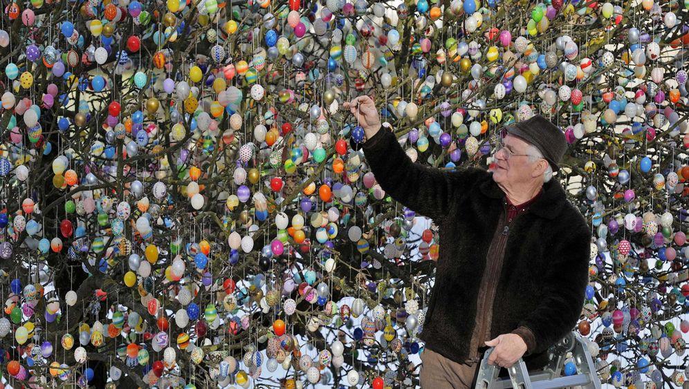 Saalfeld in Thüringen: Eierpracht am Apfelbaum
