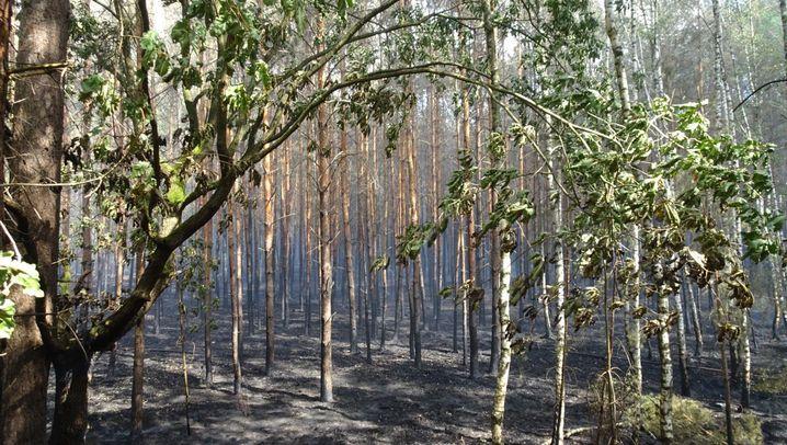 Waldbrand: Großeinsatz in Fichtenwalde