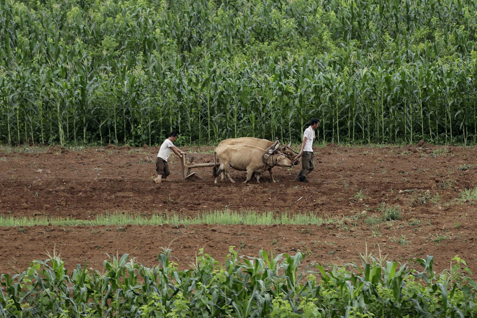 Nordkoreanische Bauern