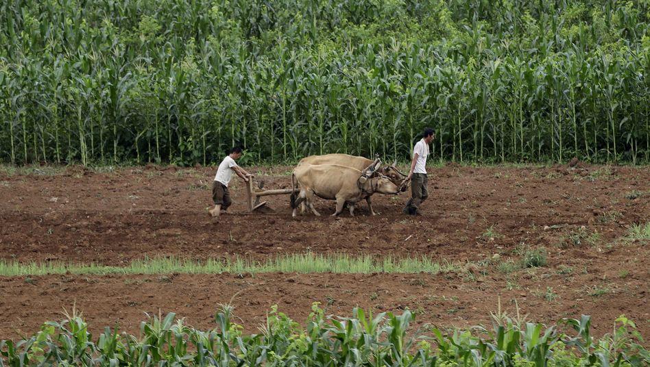 Bauern in Nordkorea