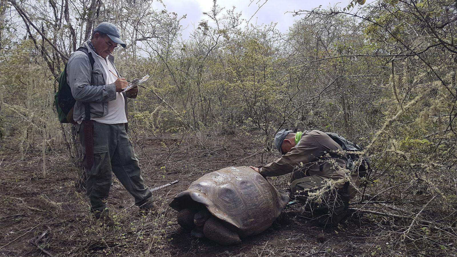 Ecuador Galapagos Giant Tortoises