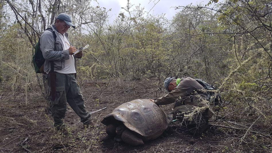 Die neu entdeckten Schildkröten leben am Wolf-Vulkan