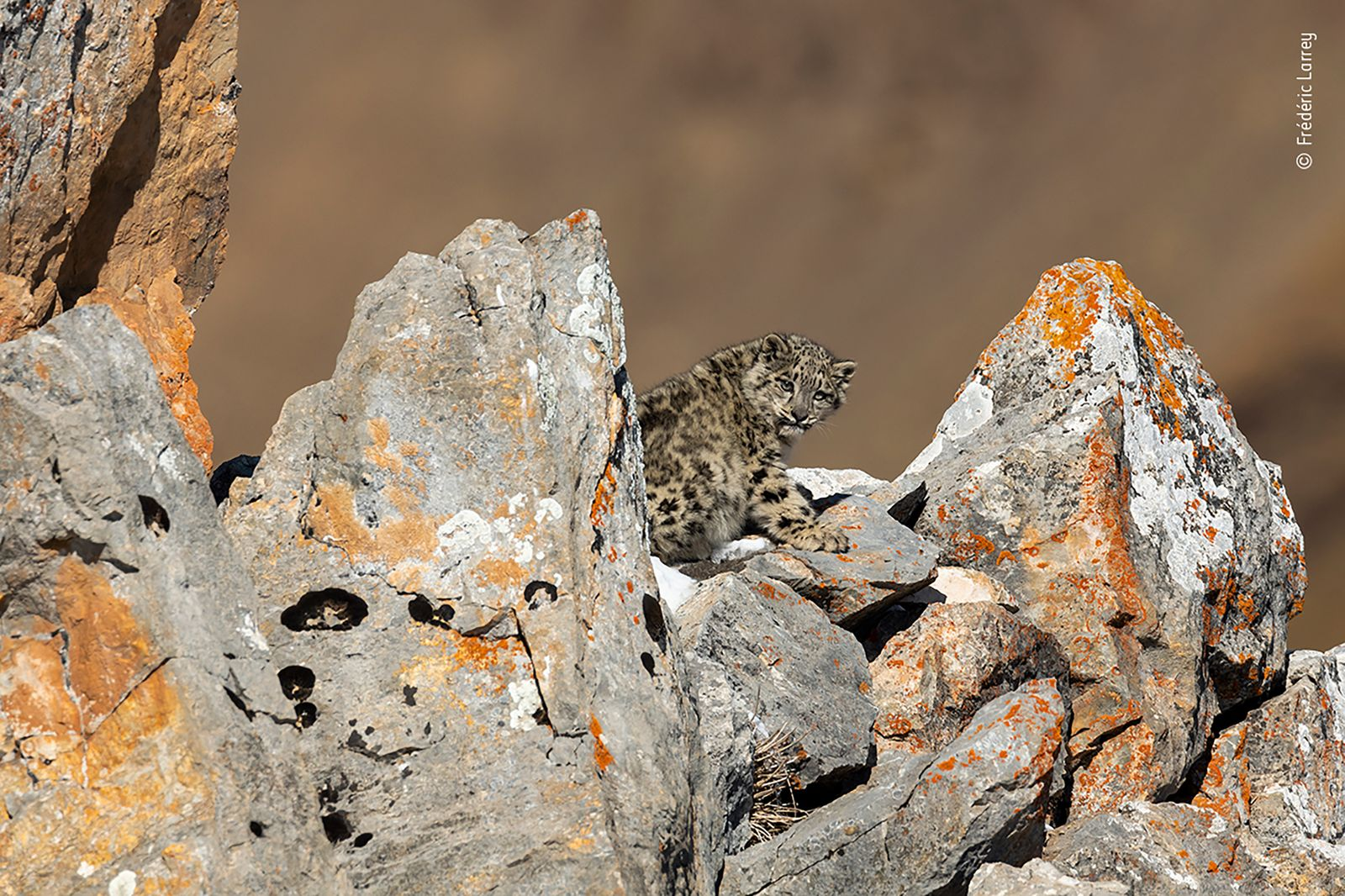Baby on the rocks by Frédéric Larrey, France