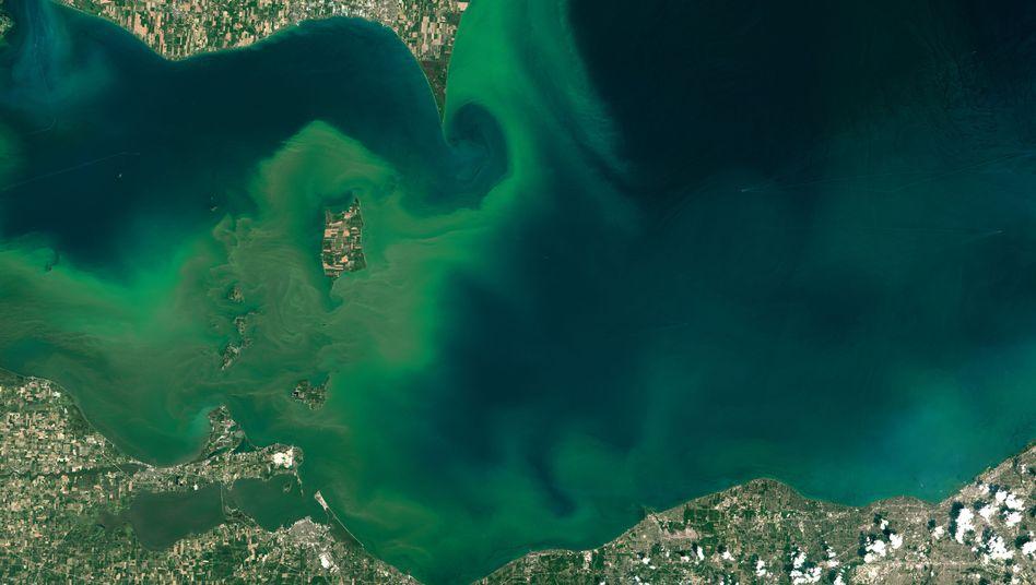 Algenblüte im Eriesee: Links der Bildmitte ist die Insel Pelee zu sehen, die zu Kanada gehört und vor allem landwirtschaftlich genutzt wird