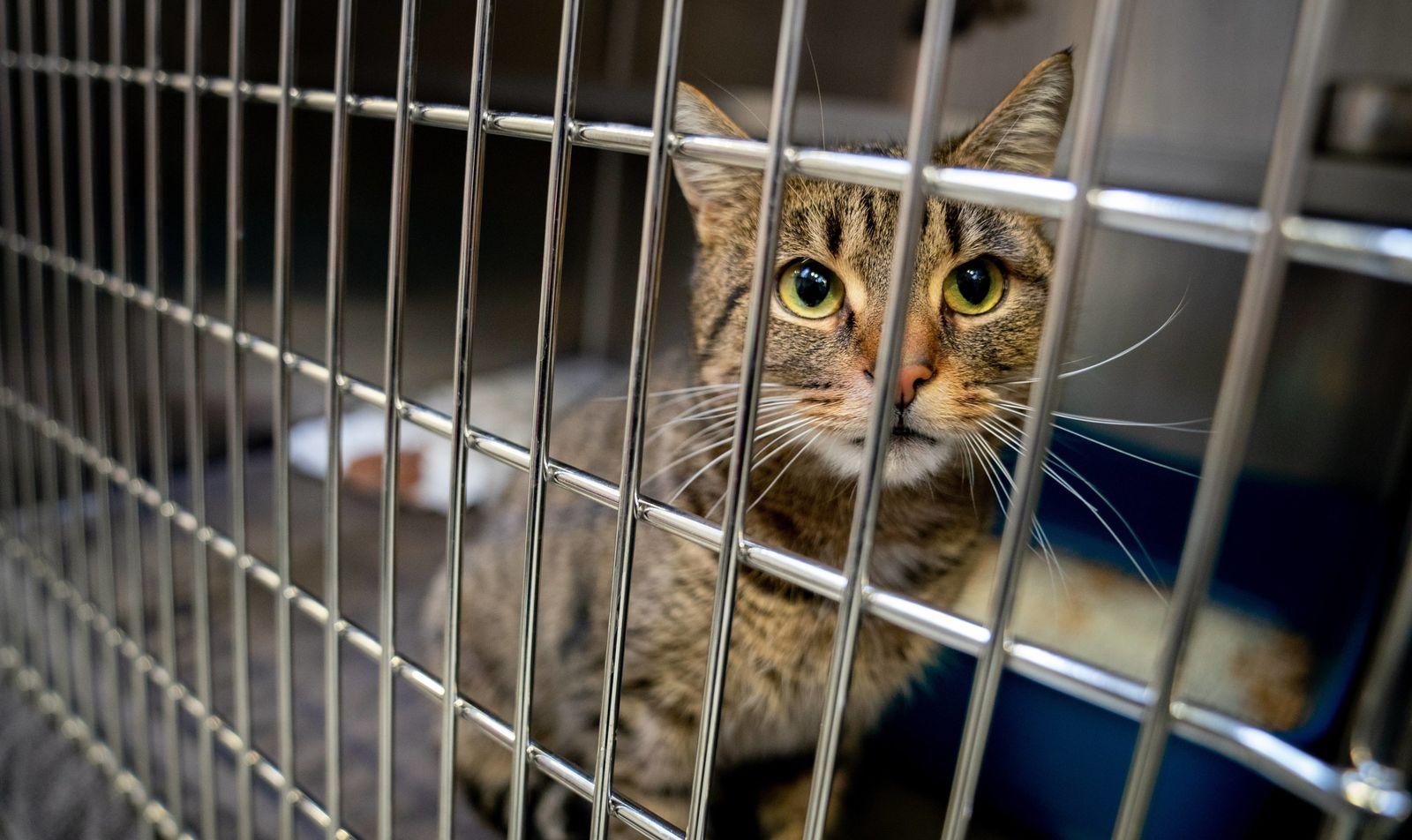 Tierheime verhängen Vermittlungsstopp zu Weihnachten