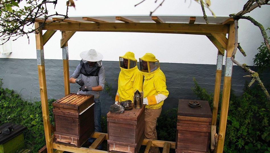 Beesharing-Team im Einsatz: Wann, wo, wie viele?