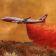 Größtes Löschflugzeug der Welt hebt über Amazonasregion ab