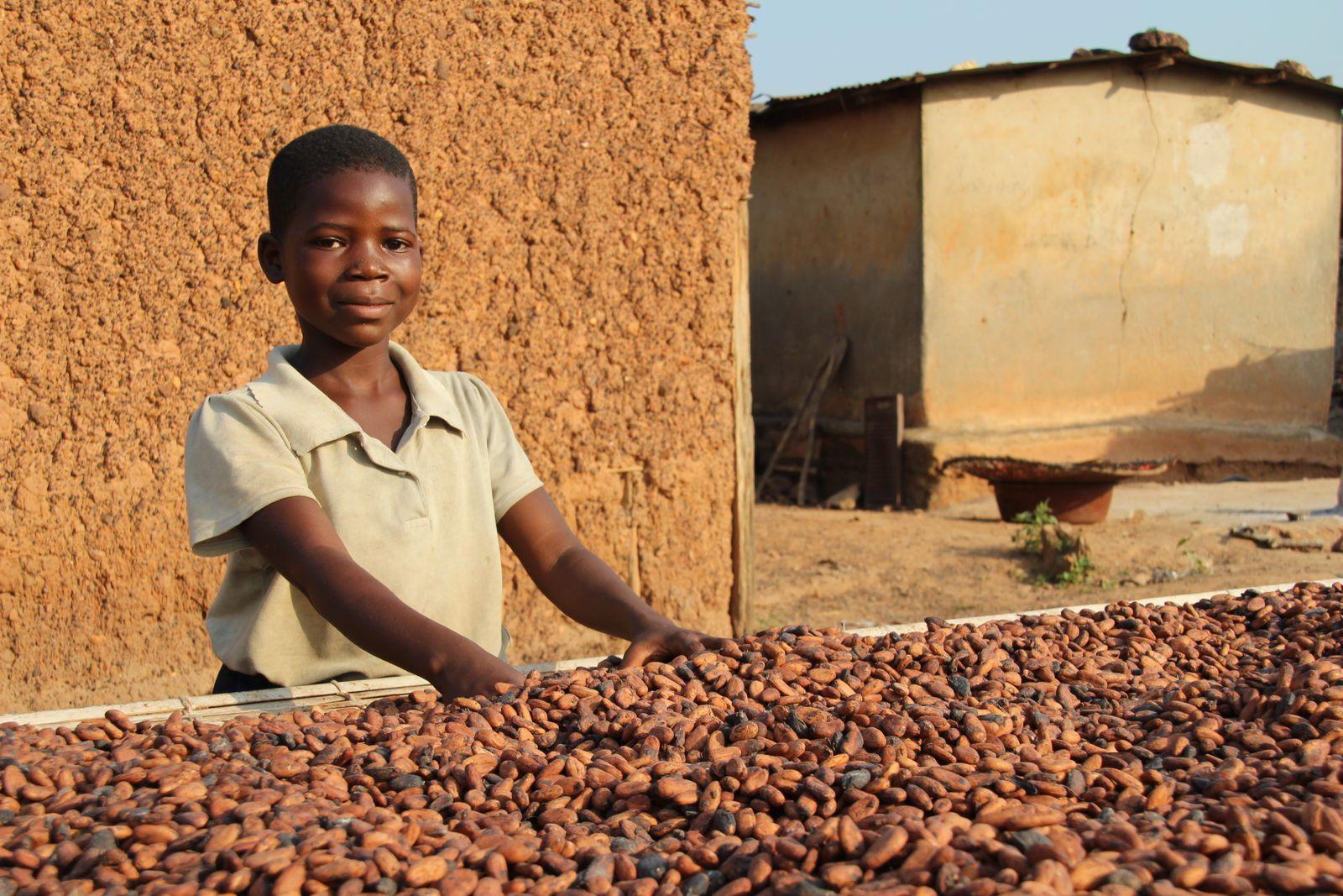 Kakaoanbau in Westafrika
