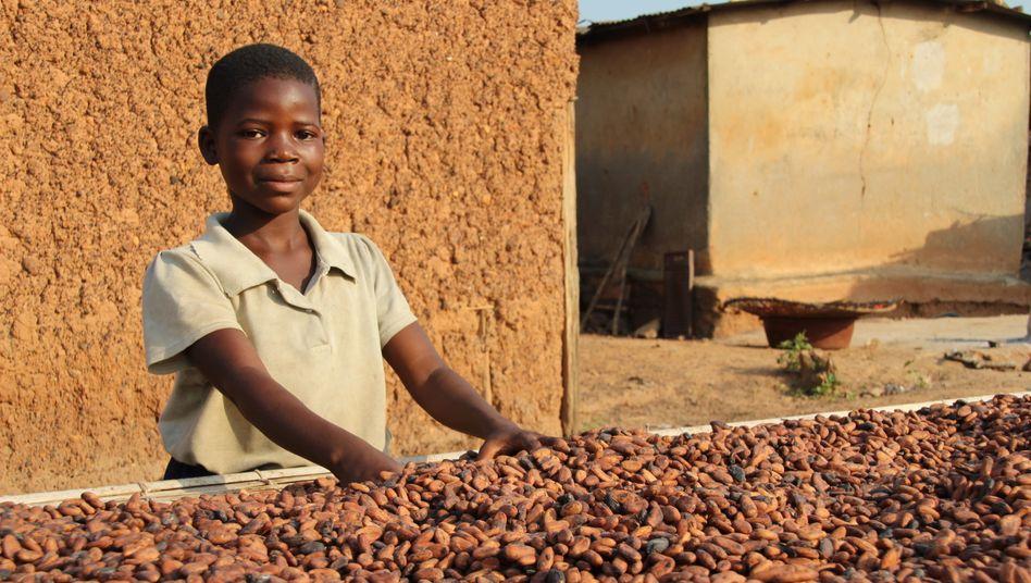 Der neunjährige Moahe hilft beim Trocknen der Kakaobohnen in Konan Yaokro, Elfenbeinküste