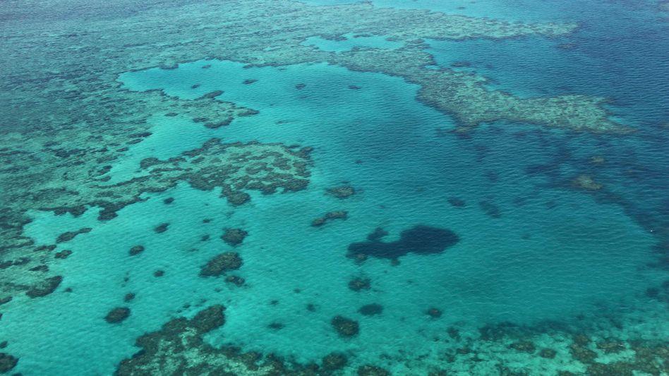 Great Barrier Reef (2014)