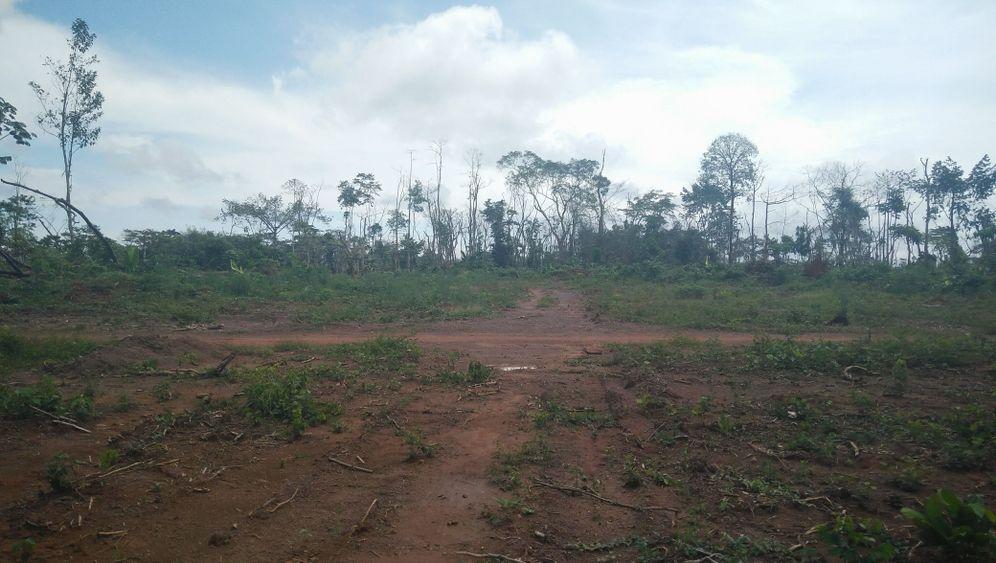 Rodungen für Kakaoplantagen: Schokolade statt Regenwald