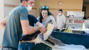 Das Geheimnis der Schildkröten von Tel Aviv