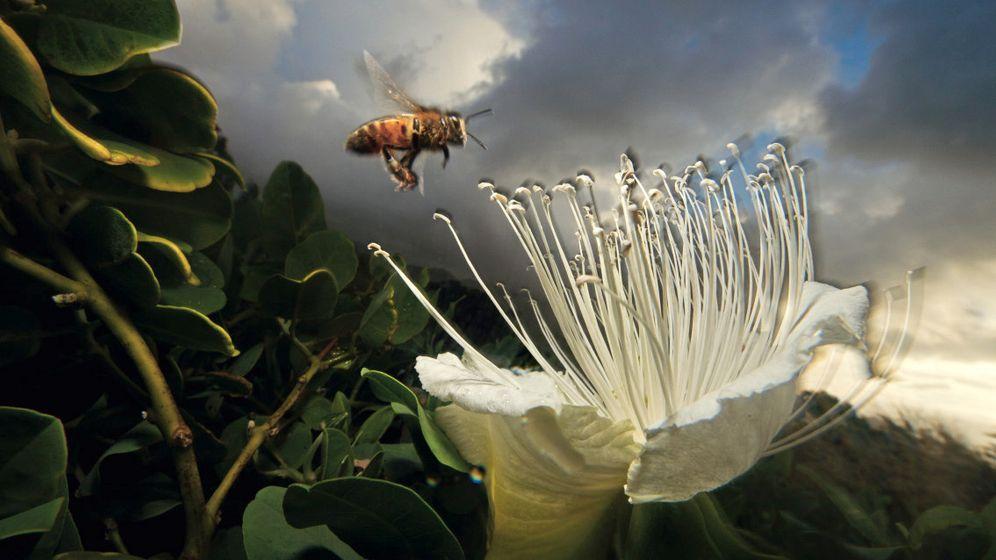 Bienen und Käfer: Bestäuber im Einsatz