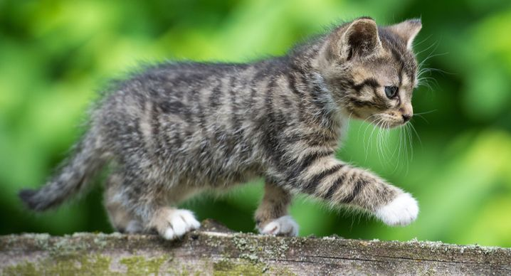 """Manche Laute in der Sprache der Katzen sind leicht zu deuten: als """"Ich will, ich will, ich will"""""""