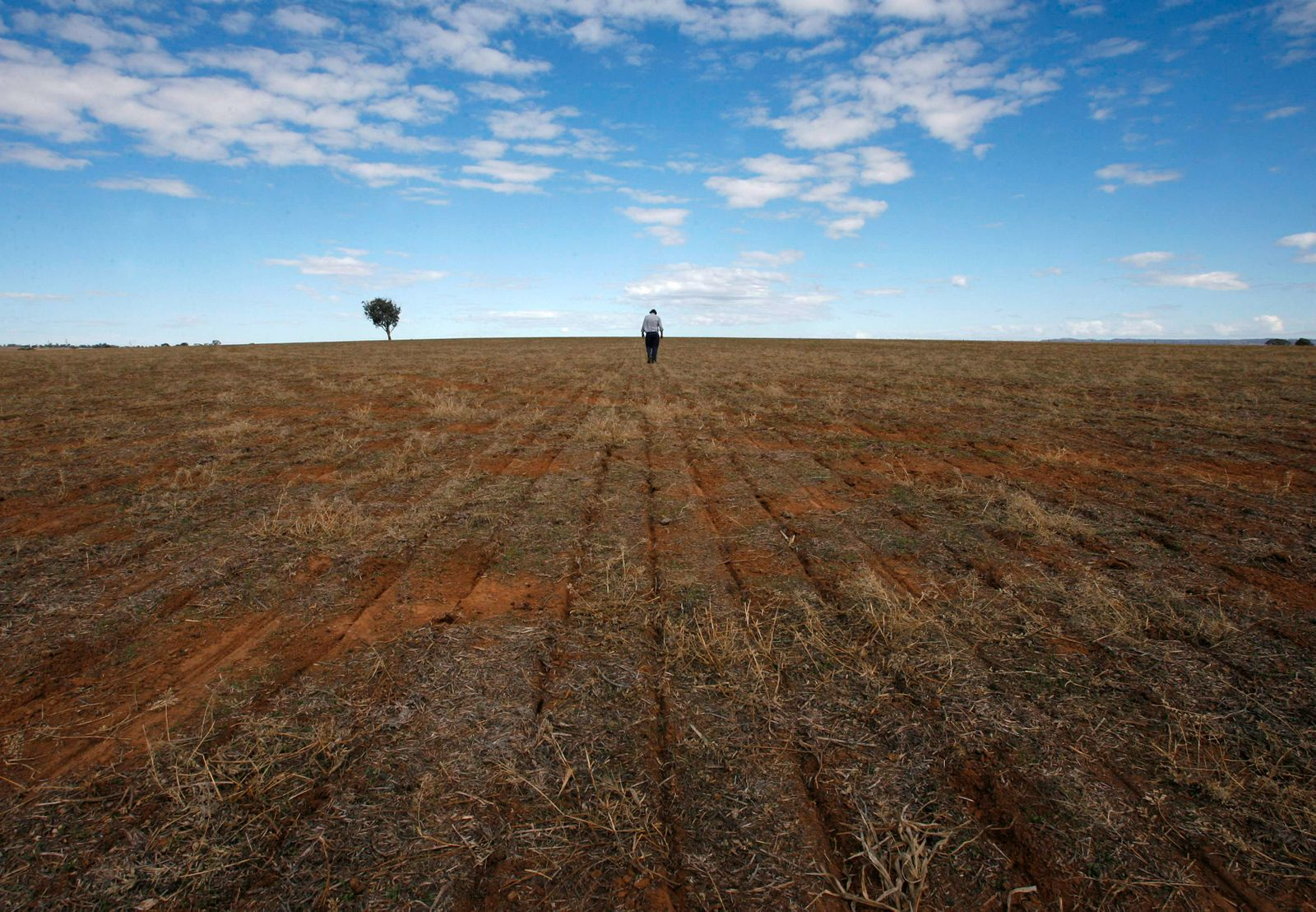 Farmer Fagan inspects rows of seeds in New South Wales