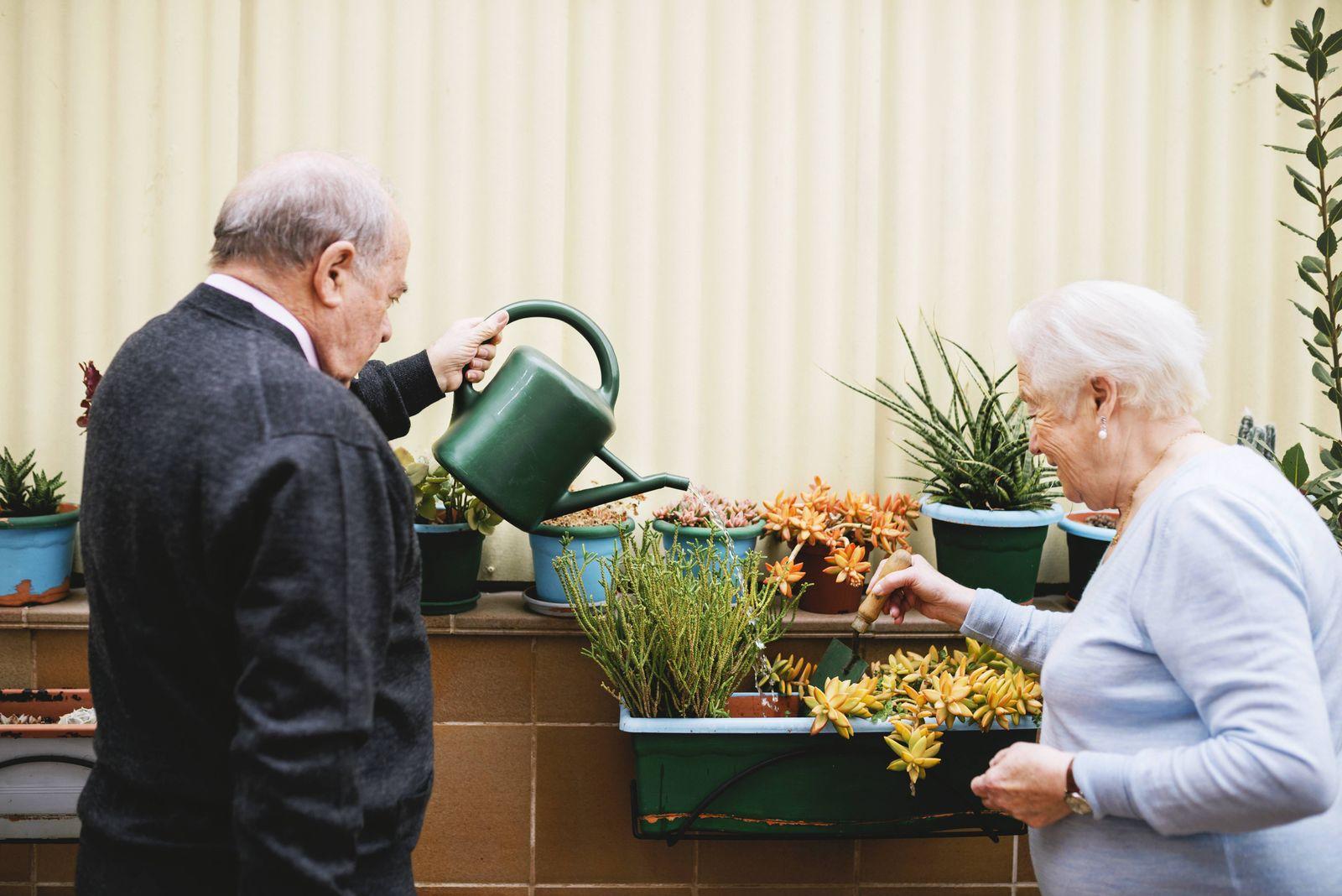 EINMALIGE VERWENDUNG Paar/ Demenzvorsorge/ Gärtnern