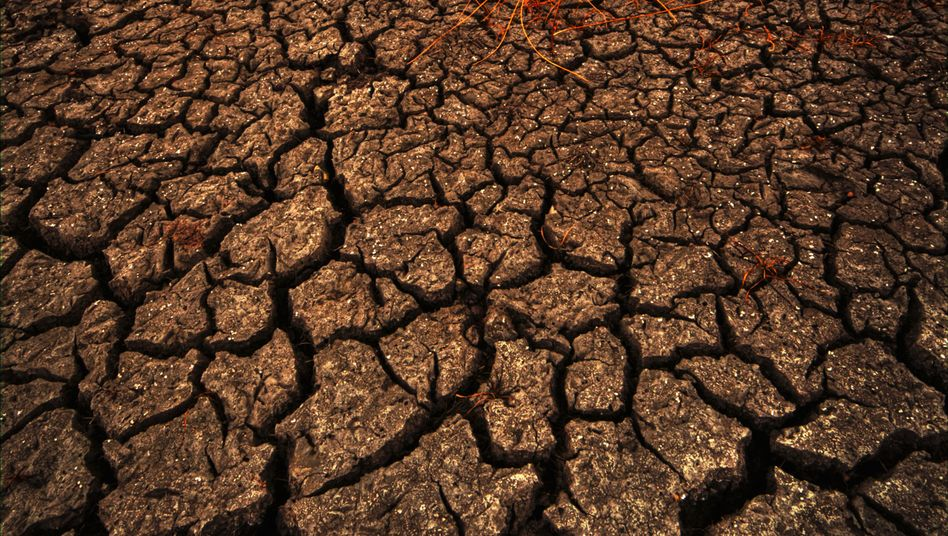 Trockenheit: BND warnt vor künftigen Konflikten