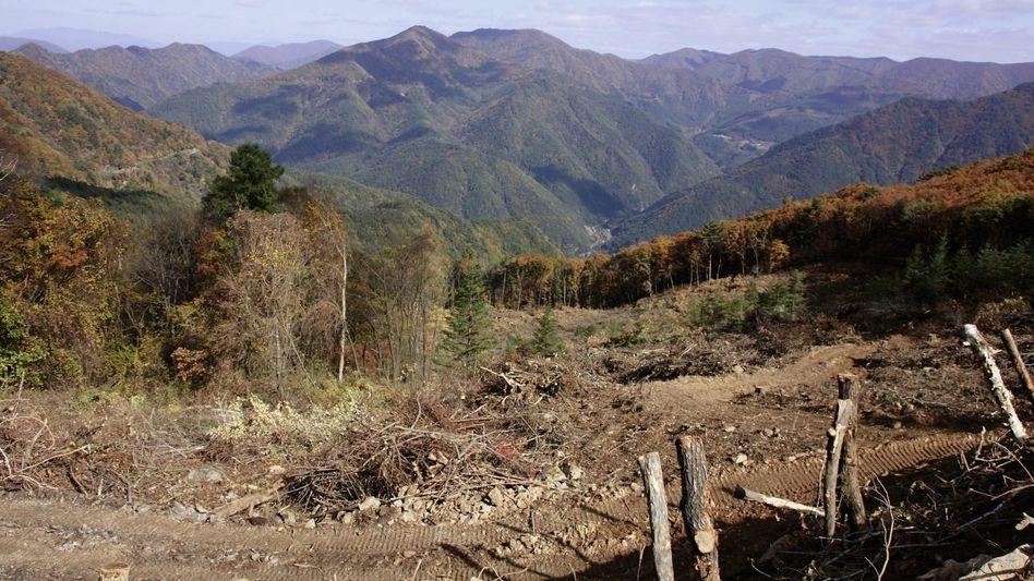 Gerodeter Hang am Mount Gariwang