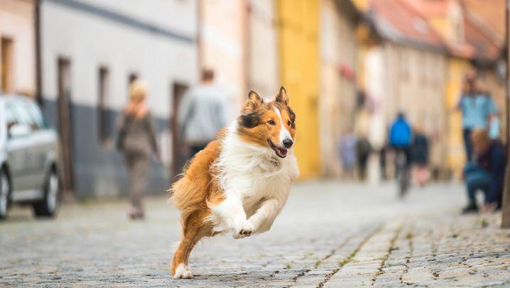 """""""Lassie - eine abenteuerliche Reise"""""""