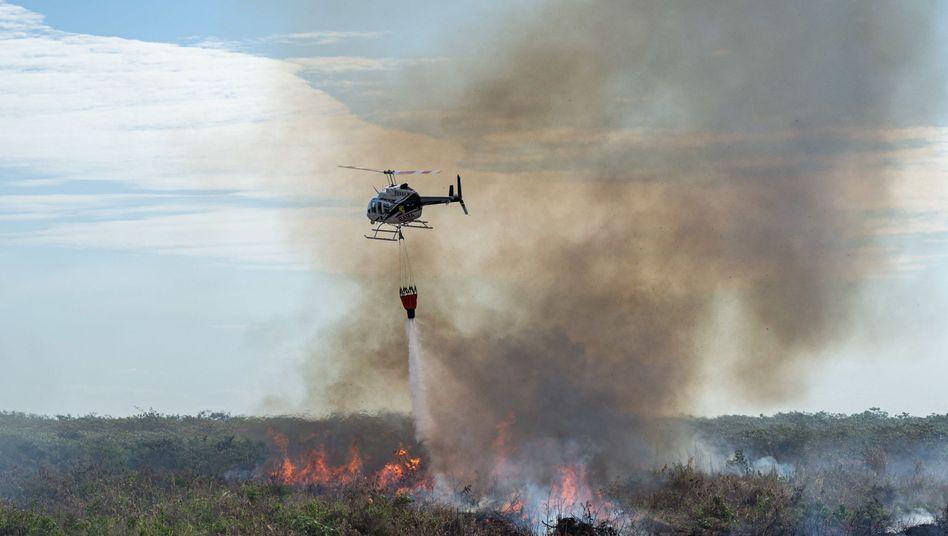 Löscheinsatz in Brasilien: Kampf gegen Zehntausende Brandherde