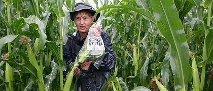Genmais-Gegnerin (in Altreetz): Beweismittel? Künftig soll der Anbau zugelassener GVO-Sorten erlaubt sein - solange ein ausreichender Mindestabstand zu konventionellen Feldern gewahrt wird