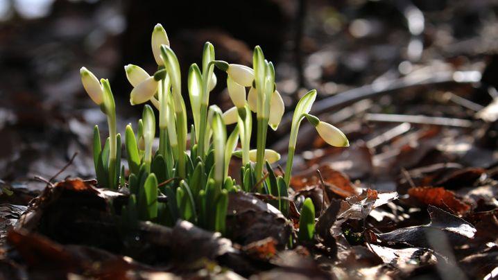"""Wetter mit Hoch """"Frauke"""": Von Frost bis Frühling"""