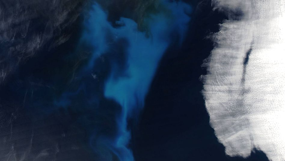 Eine Planktonblüte im Atlantik aus dem All gesehen