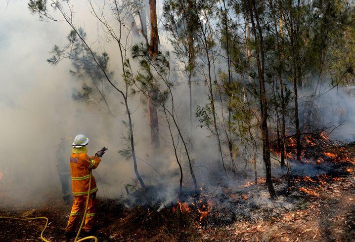 In New South Wales kämpfen 1600 Feuerwehrleute bei großer Hitze und Wind gegen rund hundert Buschfeuer
