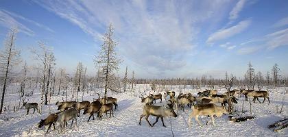 """Arktisches Russland: """"Deutlich besser, sich mit Aerosolen und Ozon zu beschäftigen"""""""
