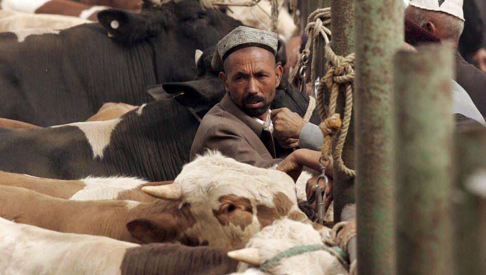 Rinder auf einem chinesischen Tier-Basar