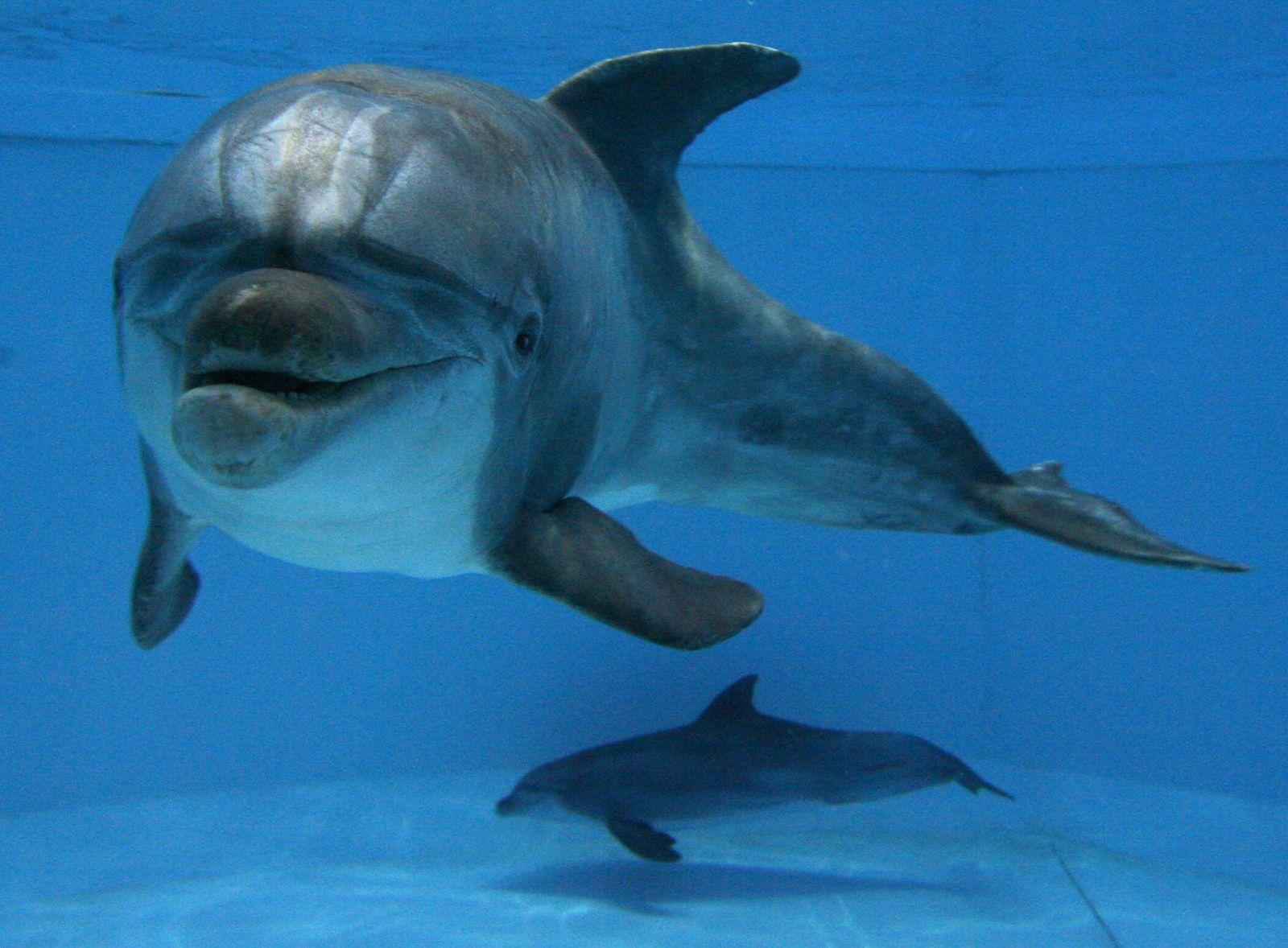 NICHT VERWENDEN Delfine Nürnberg