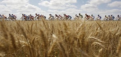 "The pack passes through wheat fields during the fifth stage of the 2008 Tour de France: ""The feat these men perform is completely beyond the grasp of ordinary mortals."""